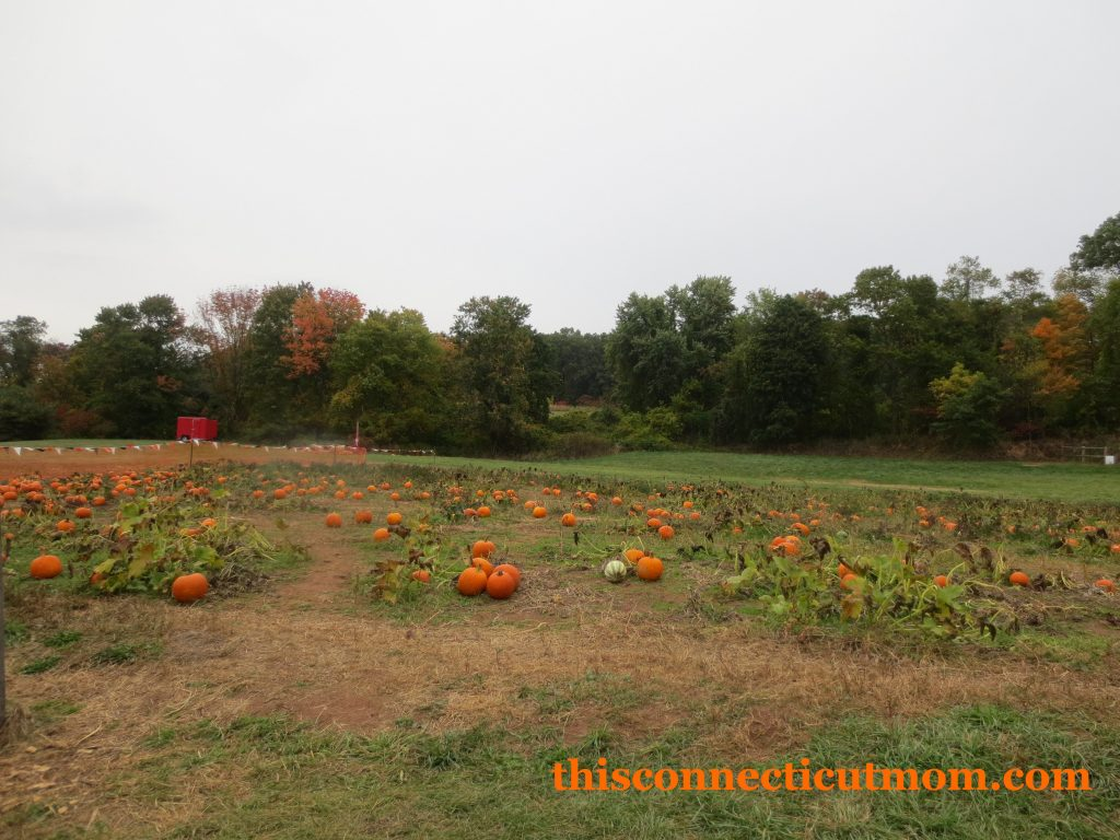 Foster Family Farm - Pumpkins