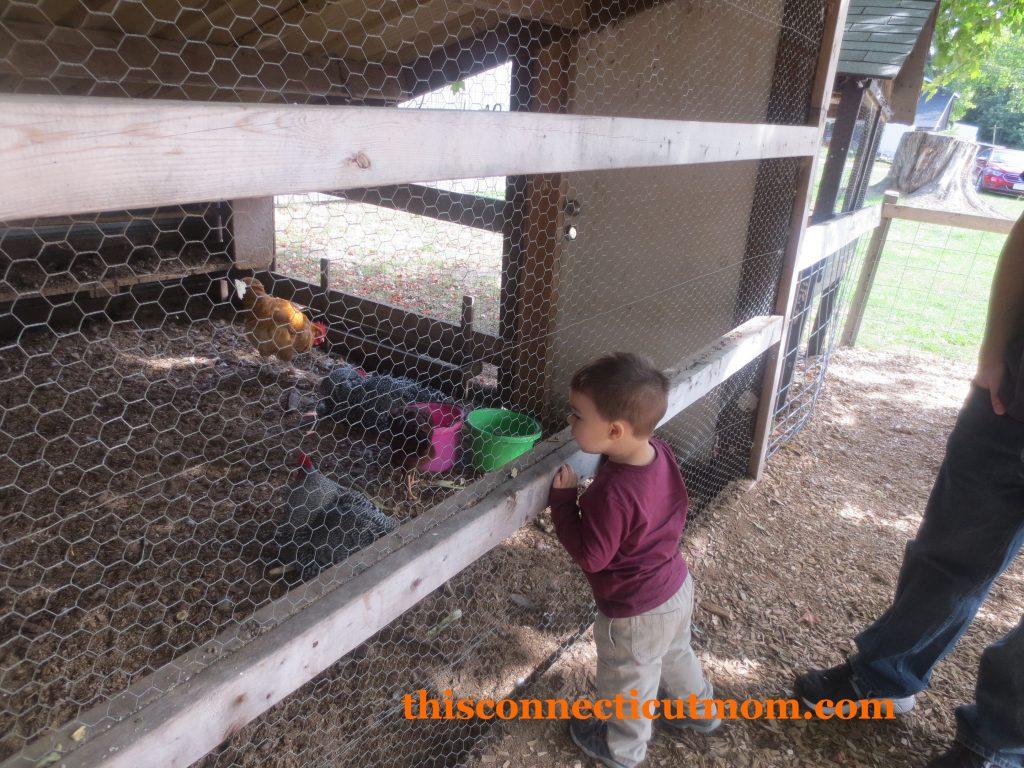 McCrays- Petting Zoo