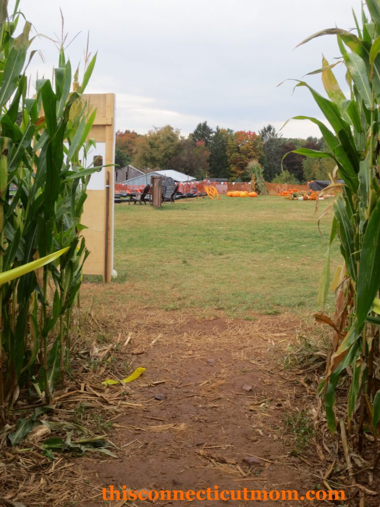 Foster Family Farm - Maze