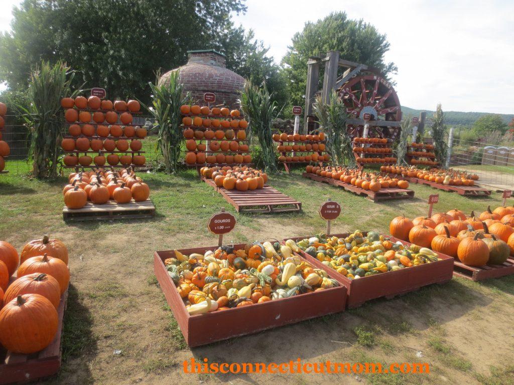 McCrays- Pumpkin