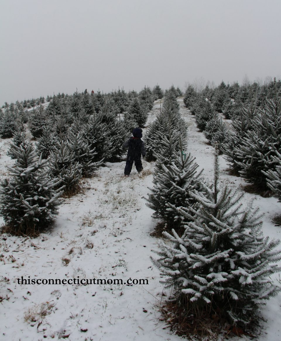Cut Your Own Christmas Trees at Syme Family Farm